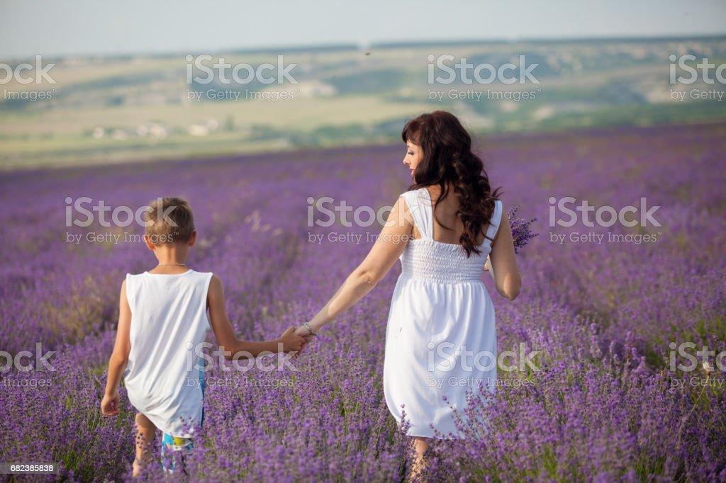 mor och son fältet lila lavendel royaltyfri bildbanksbilder