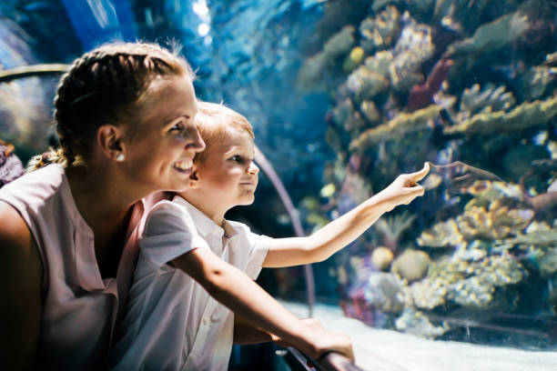 Mother and son watching sea life in oceanarium Fascinated mother and son watching sea life in oceanarium aquarium stock pictures, royalty-free photos & images