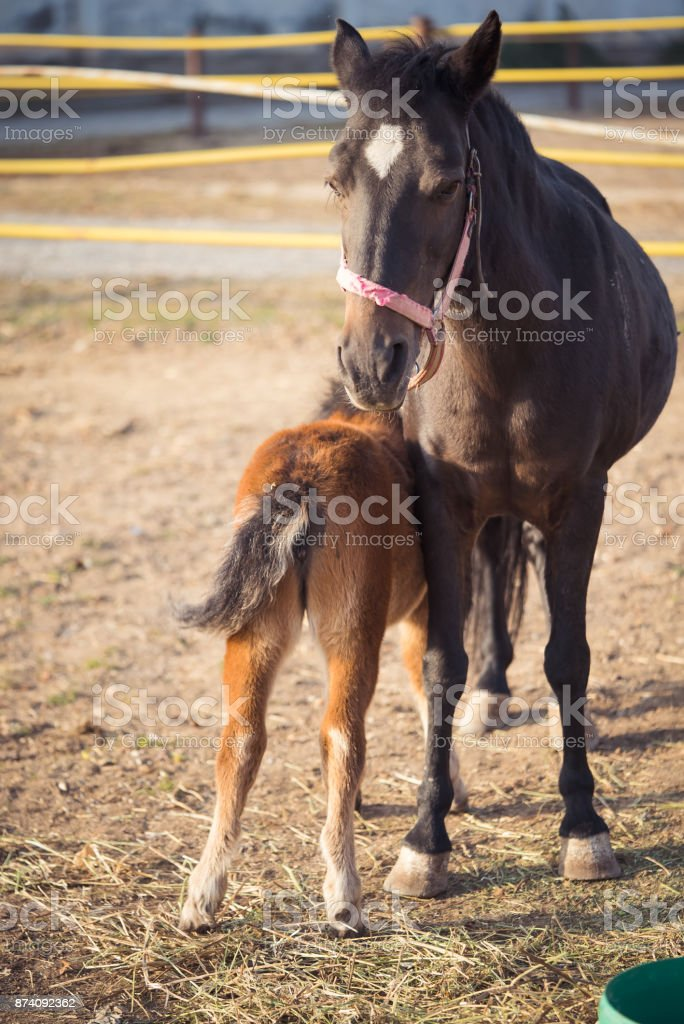 Mother And The Baby Horse Stock Photo Download Image Now Istock