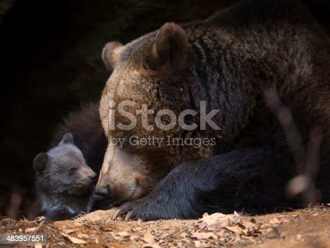 Mother bear with baby bear