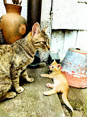 Mother cat and daughter cat in garden