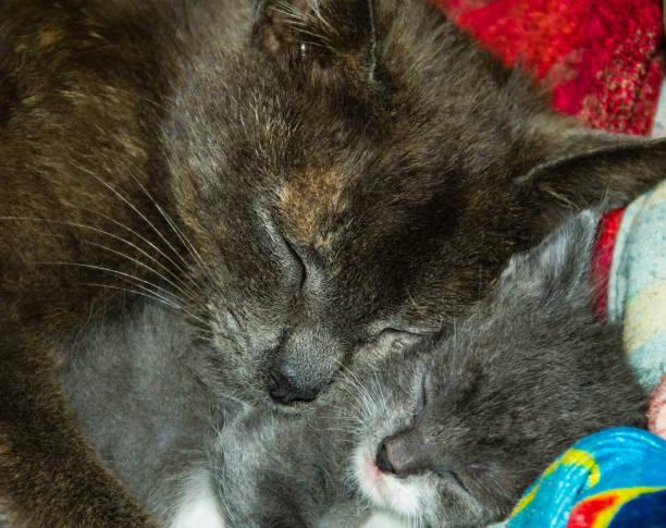 Mother cat sleeping with her newborn kitten picture id806338812?b=1&k=6&m=806338812&s=612x612&w=0&h=slpnxkoxajzfnnymjg hgfo4oxsukygoffd4vui5z4a=