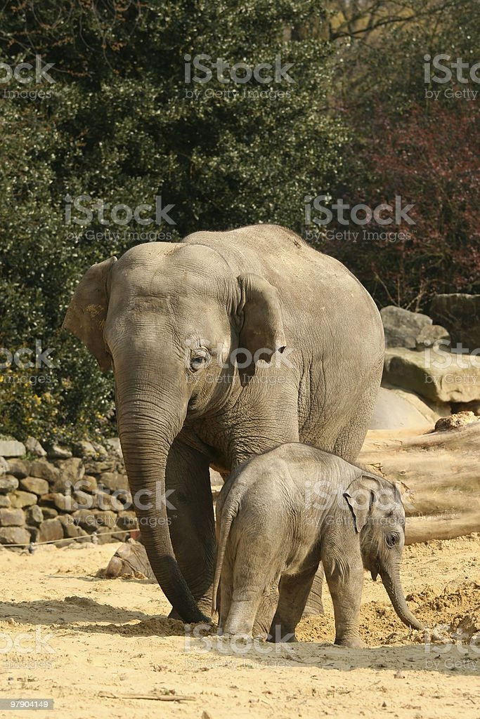 Mother elephant with baby royalty-free stock photo
