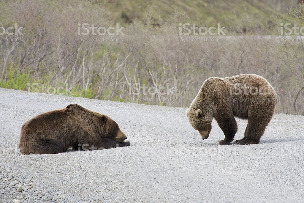 Mutter Grizzly mit cub – Foto
