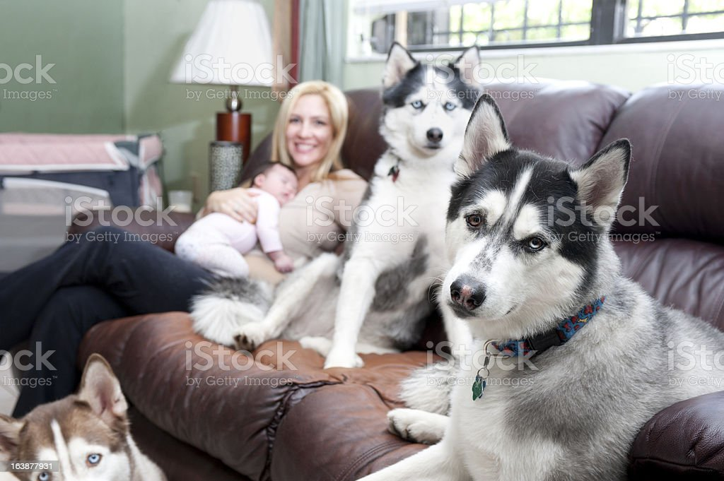 Mother holding baby girl, sitting in a sofa with dogs royalty-free stock photo