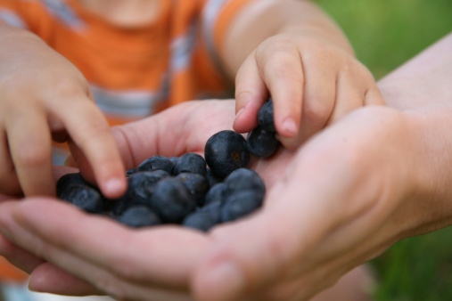 Mother Holding Blueberries For Her Child Stock Photo - Download Image Now