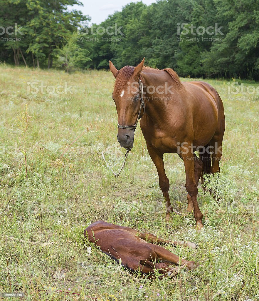 Mother Horse And Baby Foal Stock Photo Download Image Now Istock