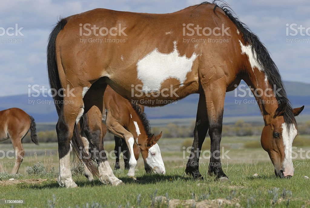 Mother Horse And Baby Stock Photo Download Image Now Istock