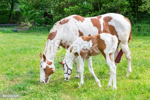 istock Mother horse with newborn foal in meadow 931232326