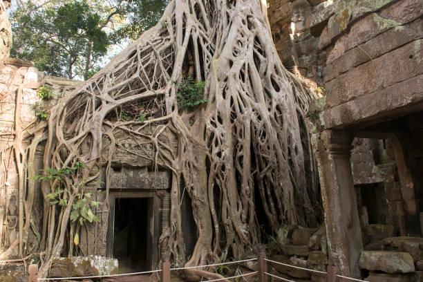 Mutter Natur zurückfordert was ihr, Ta Prohm, Angkor, Kambodscha – Foto