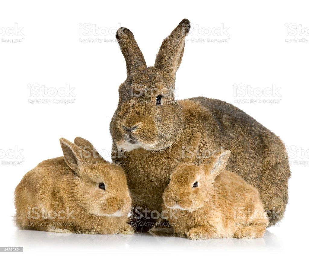 Mother Rabbit stock photo