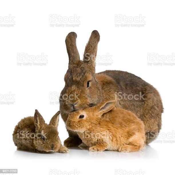 Mother rabbit picture id93212253?b=1&k=6&m=93212253&s=612x612&h=jhe0k90tizpbcgp8jaenoetpyxxatdggidbqehg9uyy=