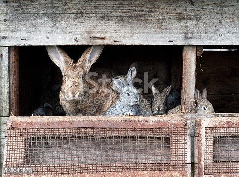 istock Mother rabbit with newborn bunnies 518042873