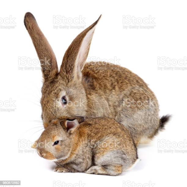 Mother rabbit with newborn bunny picture id980870562?b=1&k=6&m=980870562&s=612x612&h=ac ap5yzcqqos9y4vyjsddricqv x3ytyp6tlpxhfwa=