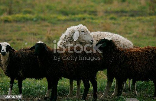 Farm, Field, Meadow, Ranch, Russia