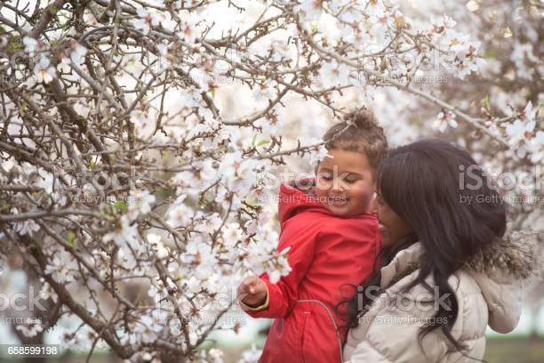 Mother showing to her child almond flowers on tree picture id658599198?b=1&k=6&m=658599198&s=612x612&h=5ahfhpkk2h7eup1npq7nlwagp2kcyxfaixzeqwooeq0=