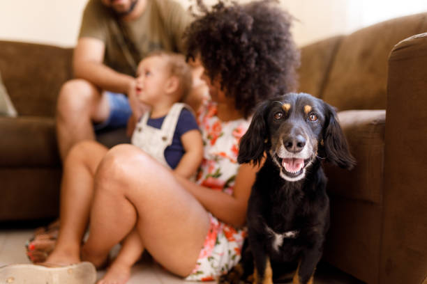 Mother, son and the dog having fun in the living room stock photo