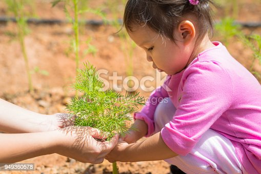 Early education, Gardening and nature. 3 y/o girl doing a class project.