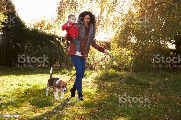 Mother with child taking dog for walk in autumn garden picture id655867588?b=1&k=6&m=655867588&s=612x612&h=zteyftvyrae6kji cpzlaki2tklb0dkfbwo2bac7bce=