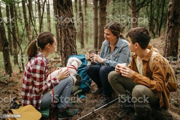 Matka Z Dziećmi Relaksująca Się W Lesie - zdjęcia stockowe i więcej obrazów Chłopcy