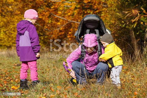 istock Mother with children searching for wild herbs 1175863739