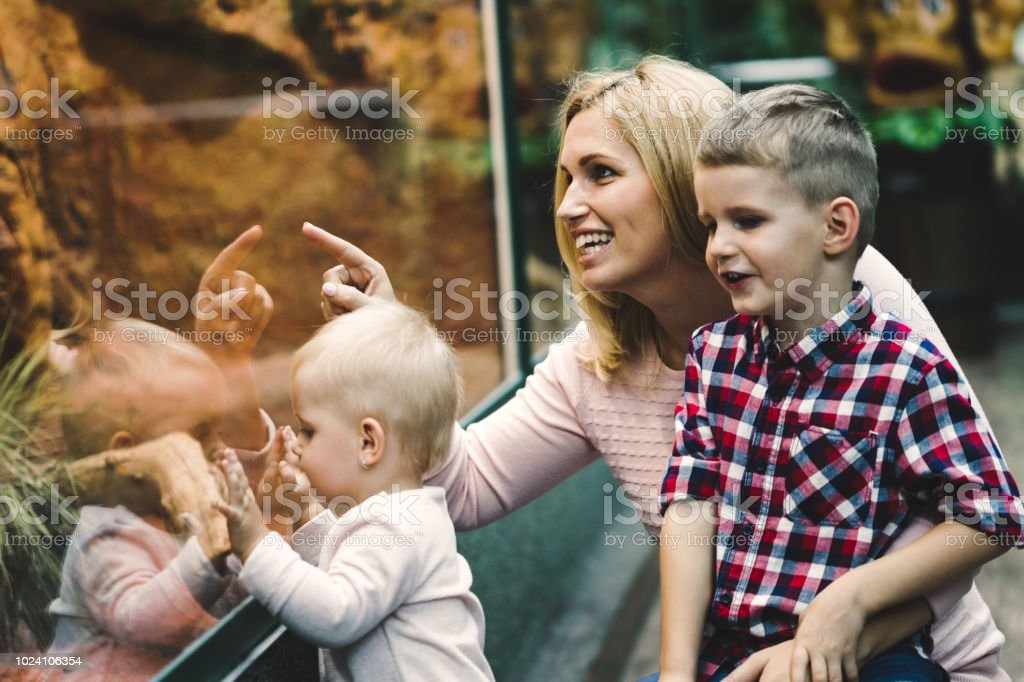 Mother with her sons looking at turtle in zoo royalty-free stock photo