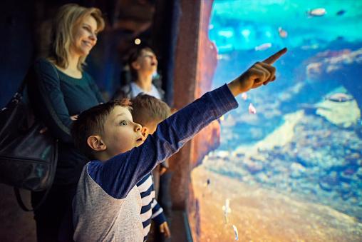 Family in a huge aquarium looking at fish.