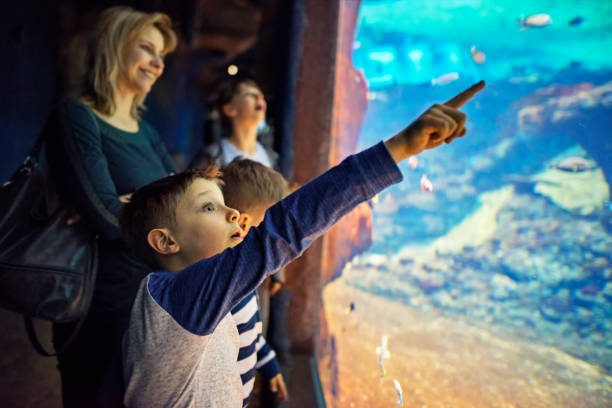 Mother with kids visiting a huge aquarium Family in a huge aquarium looking at fish. aquarium stock pictures, royalty-free photos & images