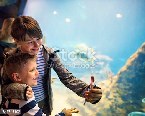 Family in a huge aquarium looking at fish. Brother and sister filming fish with smartphone.