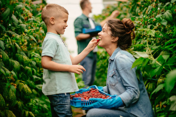 Mother with son at raspberry farm stock photo