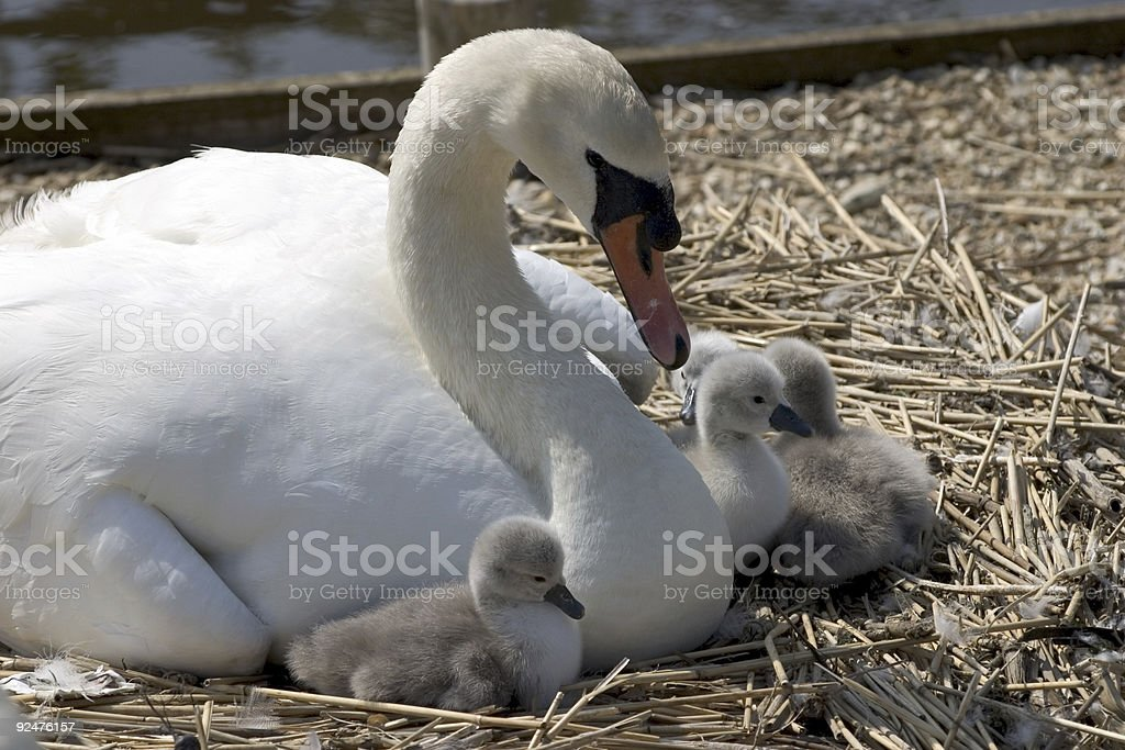 Motherly Love royalty-free stock photo