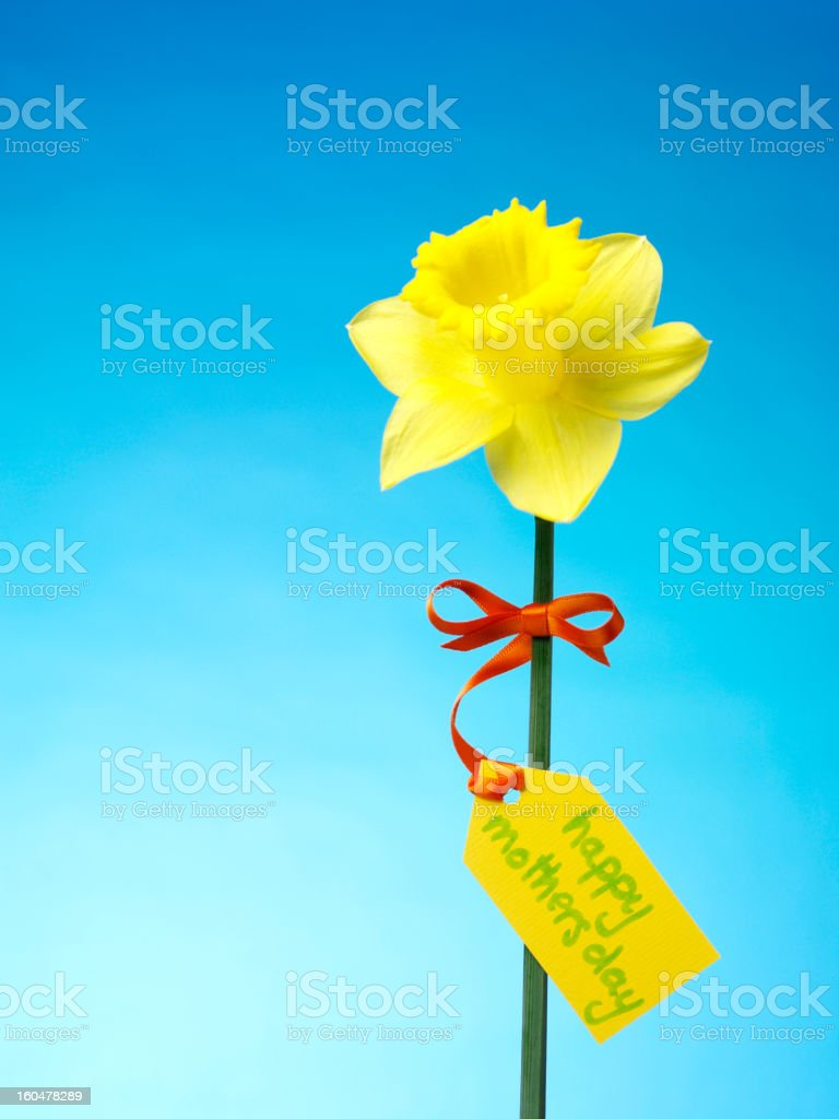 Mother's Day and Daffodil royalty-free stock photo