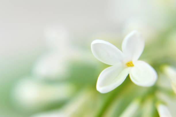 Muttertag Hintergrund. Floraler Hintergrund mit Kopierraum – Foto