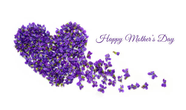mothers day card. heart shape flowers. violets love symbol isolated on white background. template for greeting card, web design - mothers day stock pictures, royalty-free photos & images
