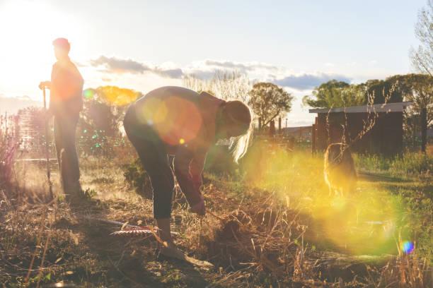 mors dag - familjen mor och barn rengöring trädgård och gårdsskötsel utomhus sent på kvällen i västra colorado - working from home bildbanksfoton och bilder