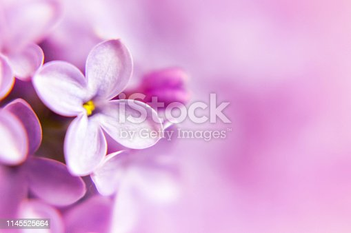 istock Mothers Day floral background with copy space 1145525664