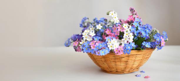 Muttertagsblumen. Vergessen Sie mich nicht Blumen im Korb – Foto