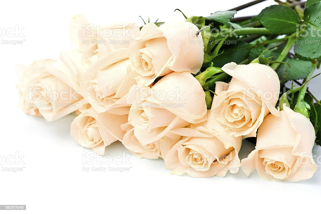 Mother's day roses royalty-free stock photo