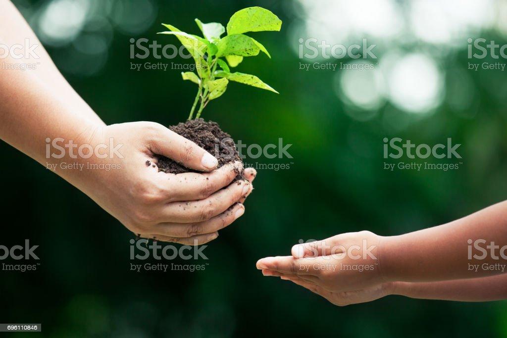 Mão da mãe dar árvore jovem à criança para plantar juntos - foto de acervo