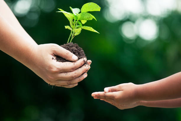 Mother's hand giving young tree to a child for planting together stock photo