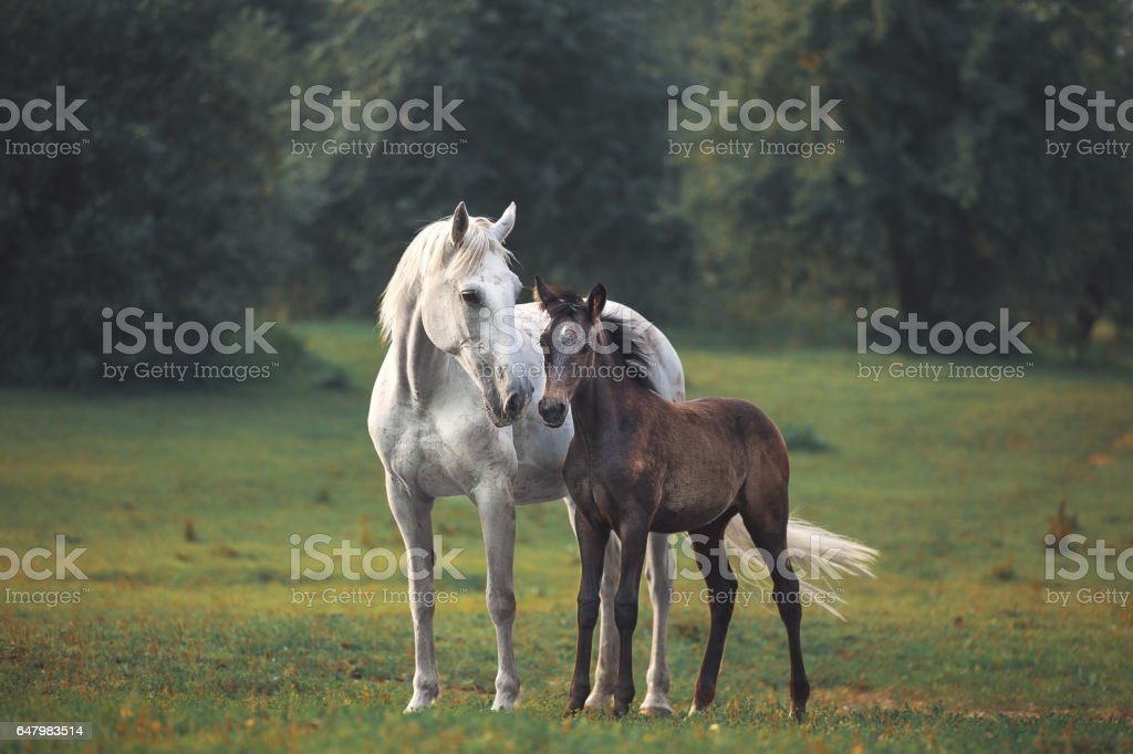 Mother's horse love stock photo