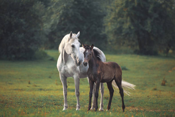Mother's horse love Mother's horse love foal young animal stock pictures, royalty-free photos & images
