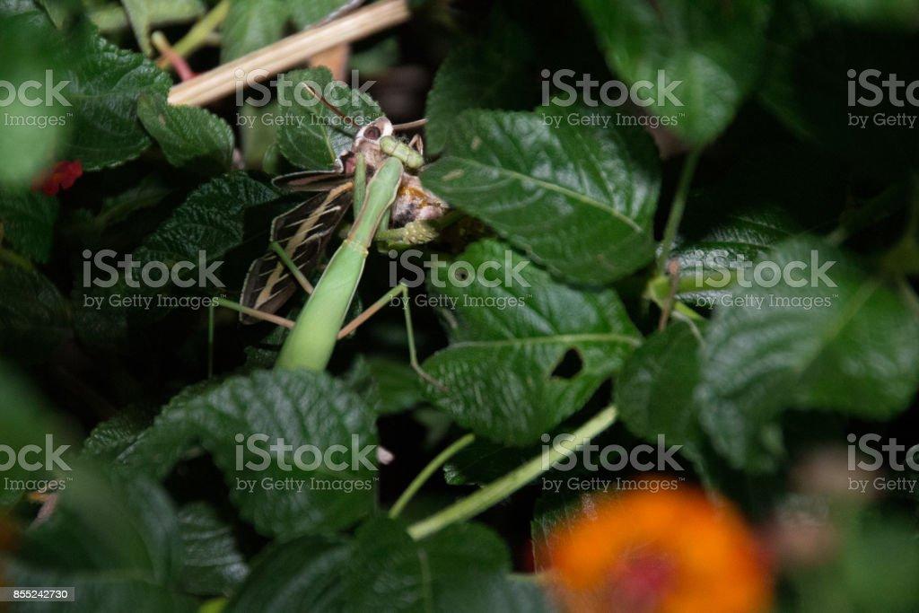 moth's bad day stock photo