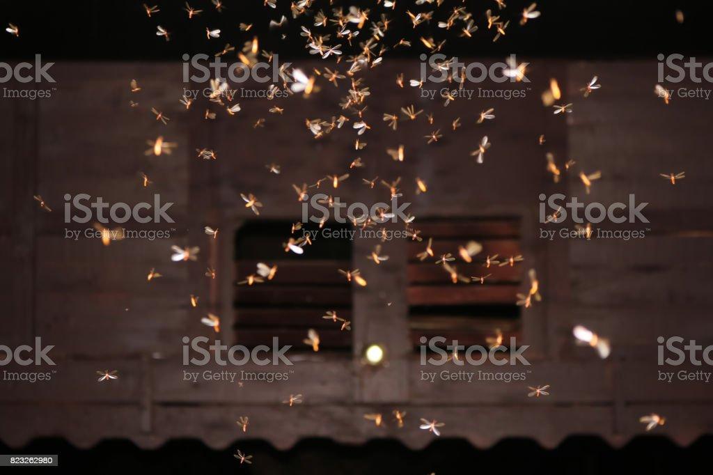 Moths flying around light bulbs stock photo