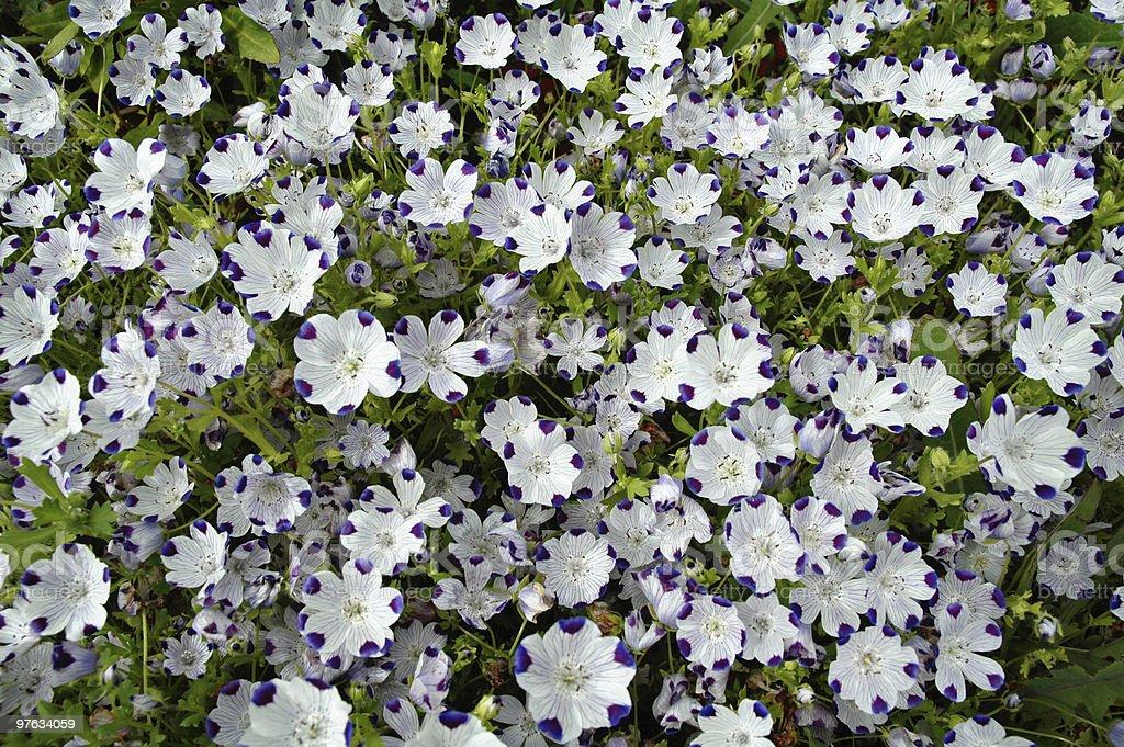 Motley flower background stock photo
