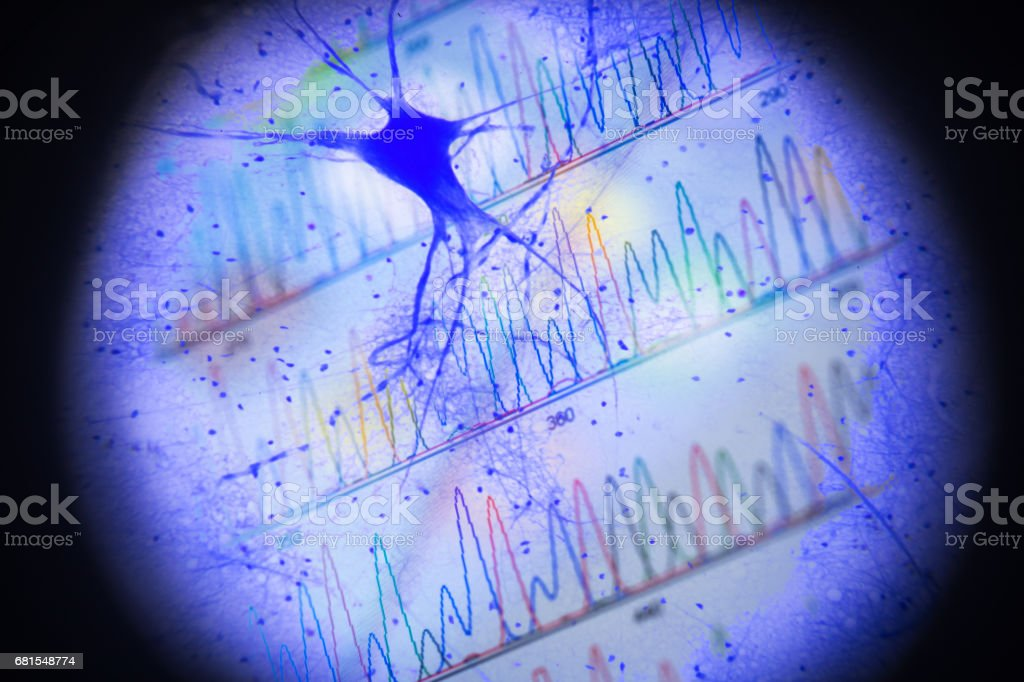 motor nerve cells in microscopy with DNA peak stock photo