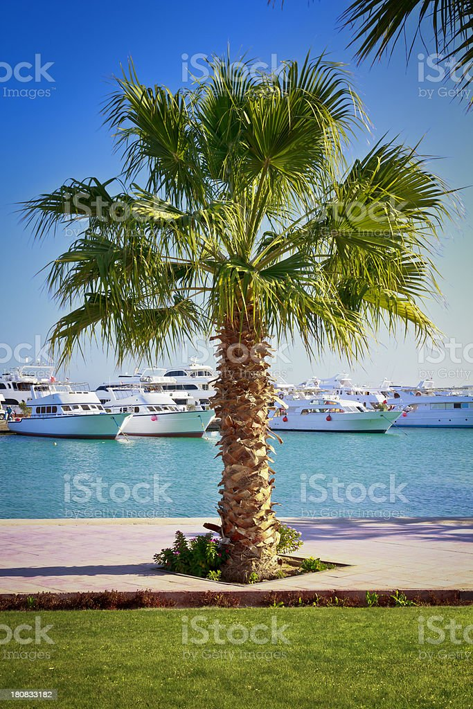 Motor yachts in tropical climate royalty-free stock photo