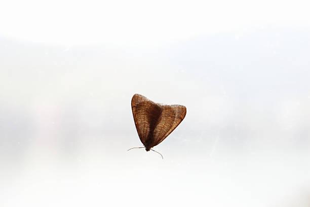 Motte – Foto