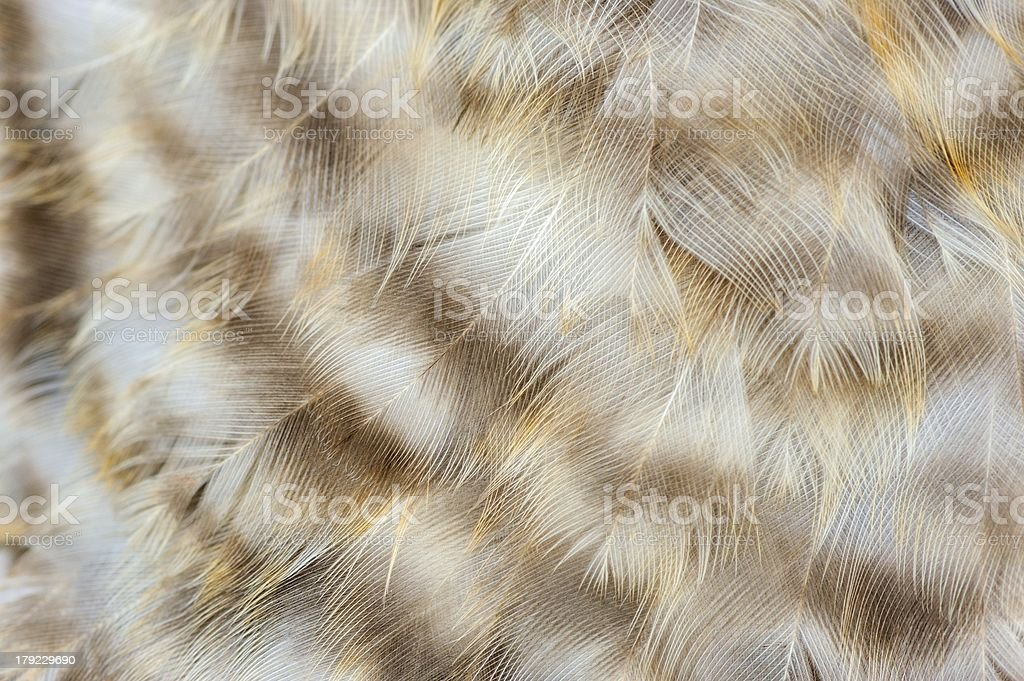 Mottled Chicken Feathers Macro royalty-free stock photo