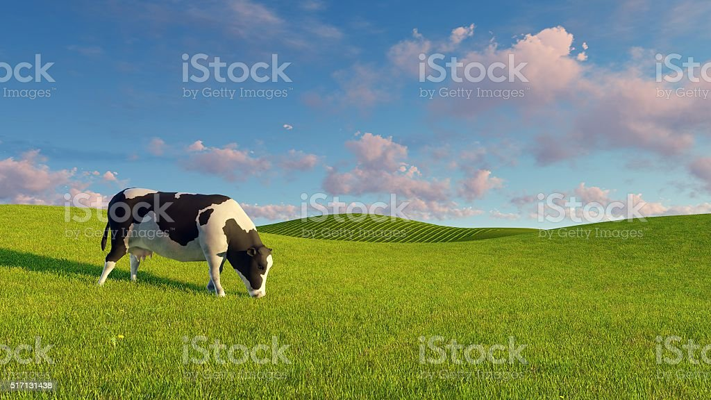 Mottled dairy cow graze on green pasture stock photo